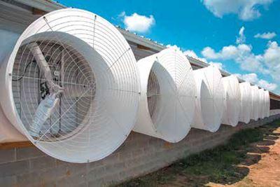 Инновационные системы устранения теплового стресса в свиноводстве